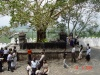 Anuratabura005.JPG