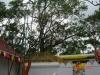 The_bo_tree08.JPG